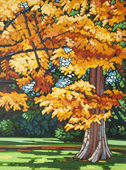 Stanley Park Maple